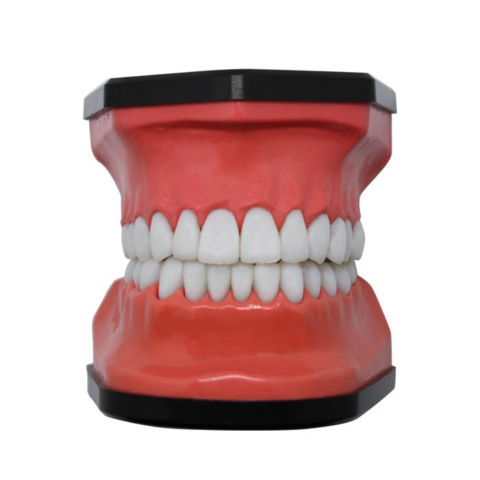 Dental Mold & Brush