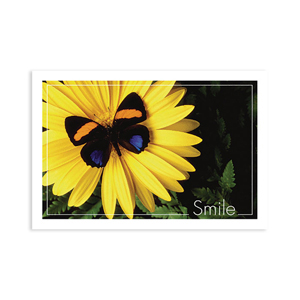 Butterfly Smile Postcard